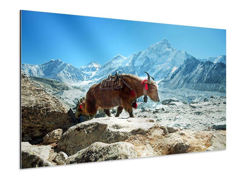 Aluminiumbild Das Himalaya-Gebirge