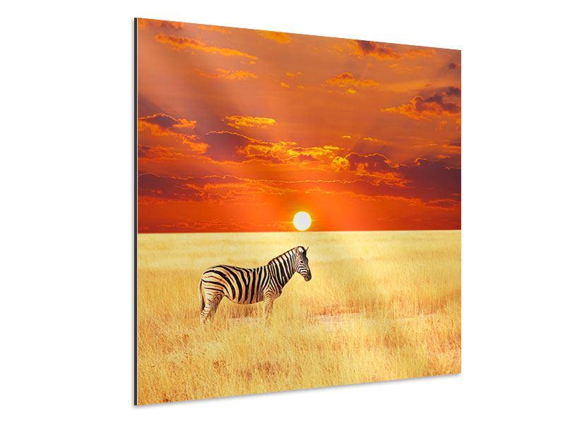 Aluminiumbild Zebra im Seregenti-Nationalpark