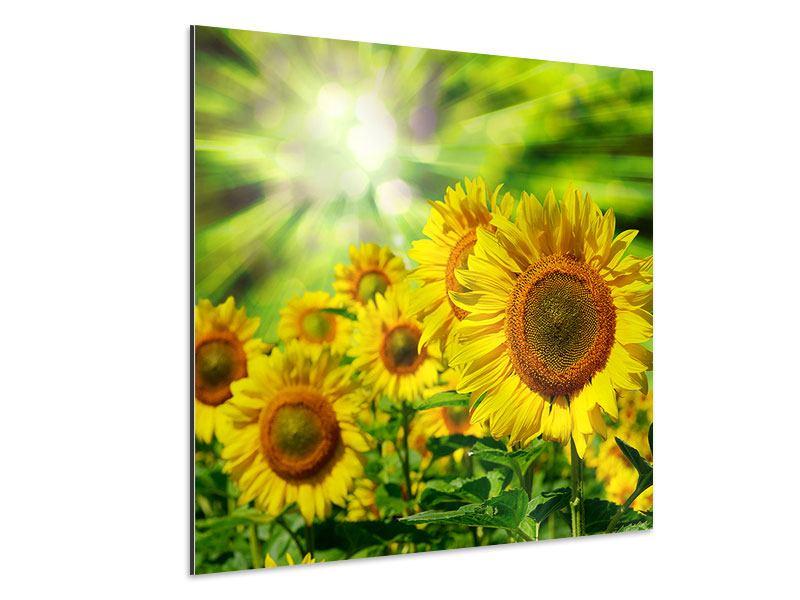 Aluminiumbild Die Sonne und die Blumen