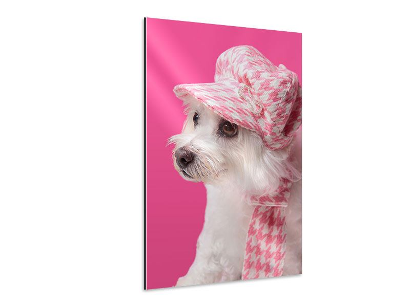 Aluminiumbild Pretty Dog In Pink