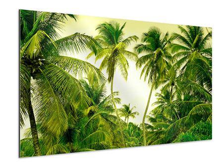 Aluminiumbild Reif für die Insel