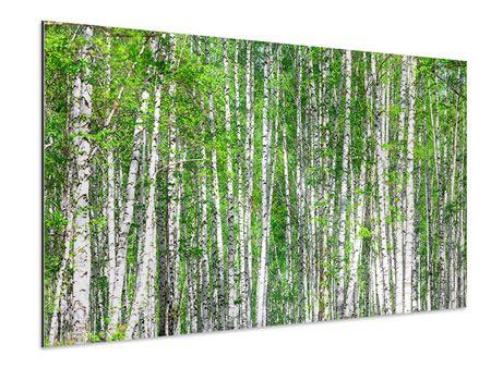 Aluminiumbild Der Birkenwald