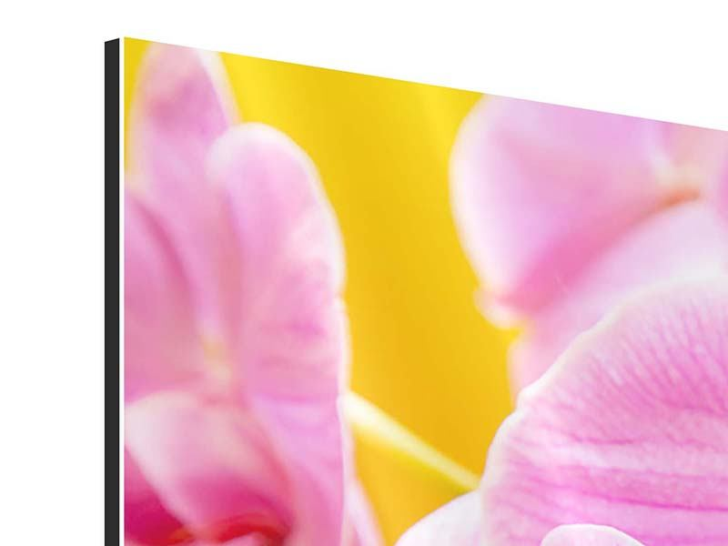 Aluminiumbild Königliche Orchideen