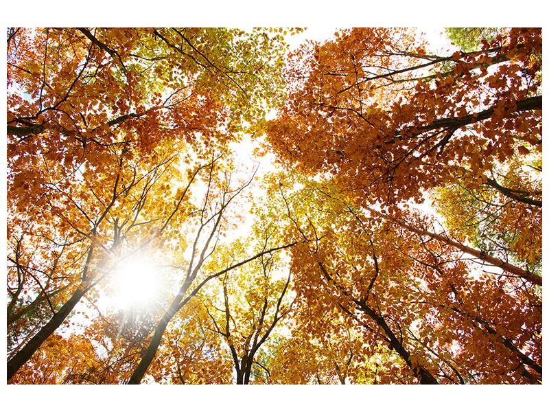 Aluminiumbild Herbstbäume