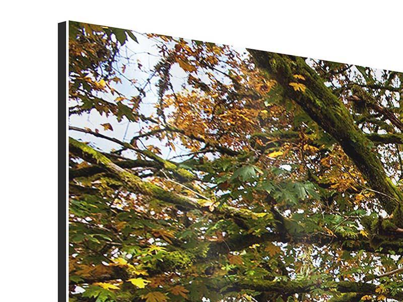 Aluminiumbild Mein Lieblingsbaum