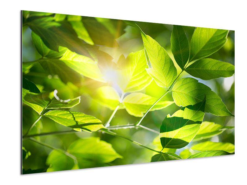 Aluminiumbild Es grünt so grün