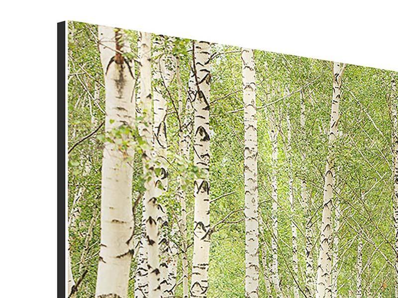 Aluminiumbild Der Birkenwald im Spätsommer