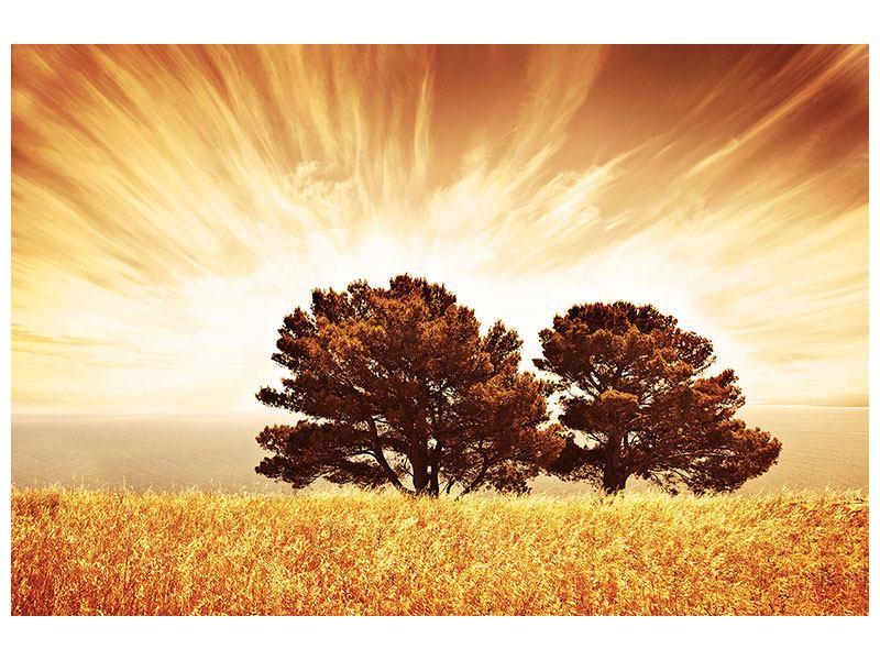 Aluminiumbild Bäume im Lichtspektakel