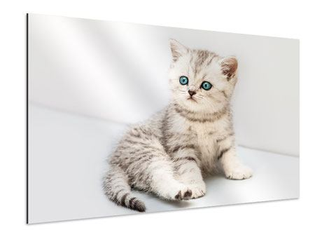Aluminiumbild Katzenbaby