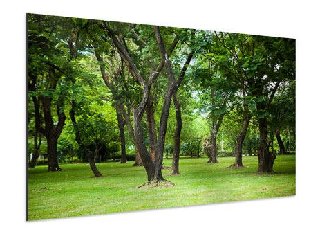 Aluminiumbild Kirschbaum-Garten