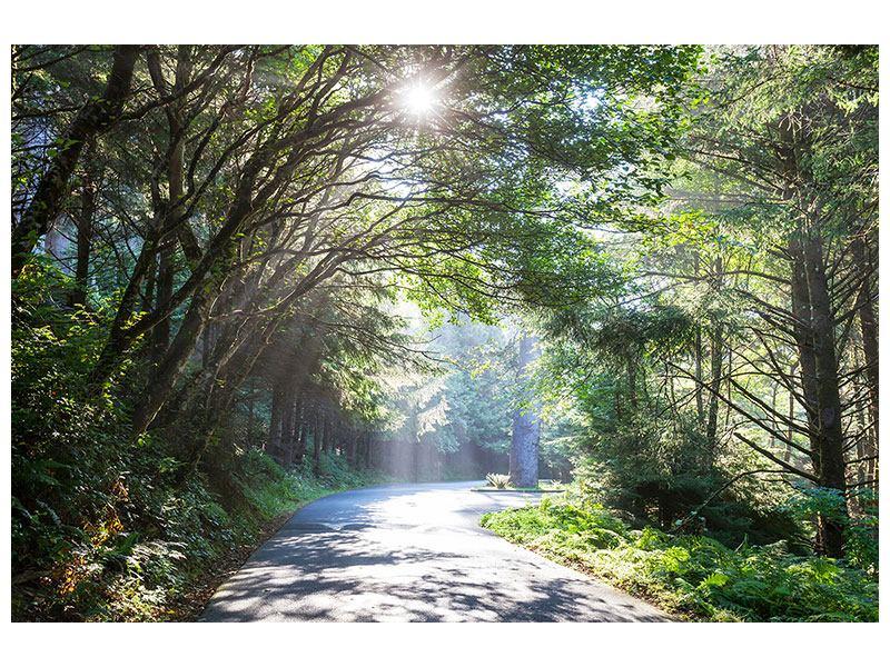 Aluminiumbild Sonniger Waldweg