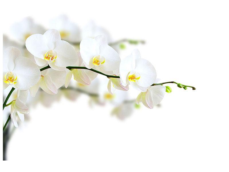 Aluminiumbild Weisse Orchideen