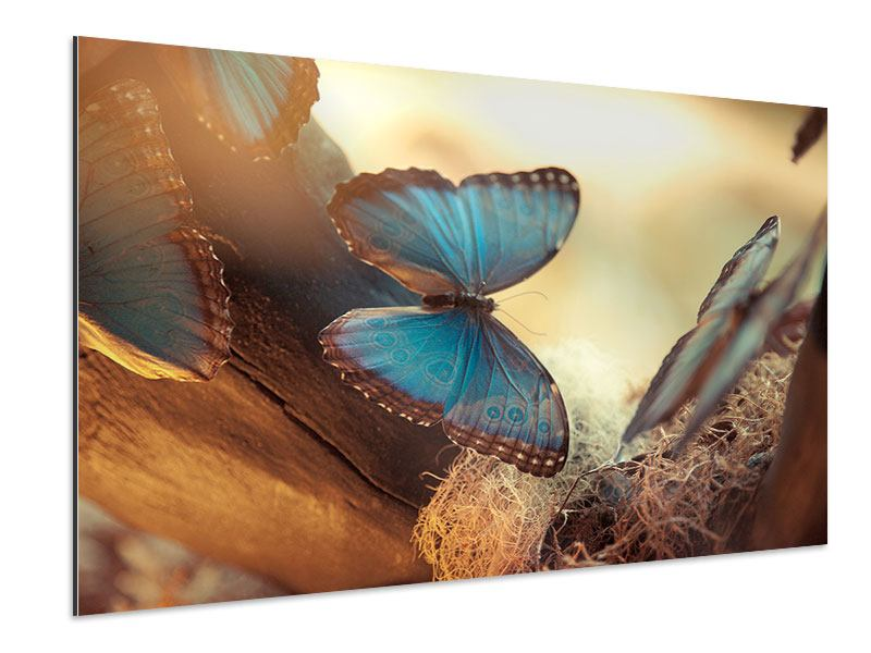 Aluminiumbild Schmetterlinge