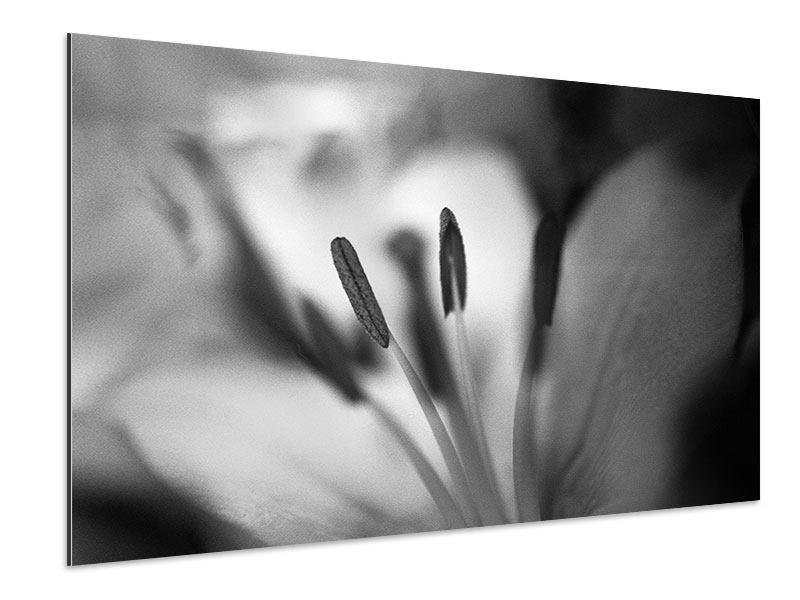 Aluminiumbild Makro Lilienblatt