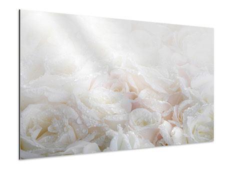 Aluminiumbild Weisse Rosen im Morgentau