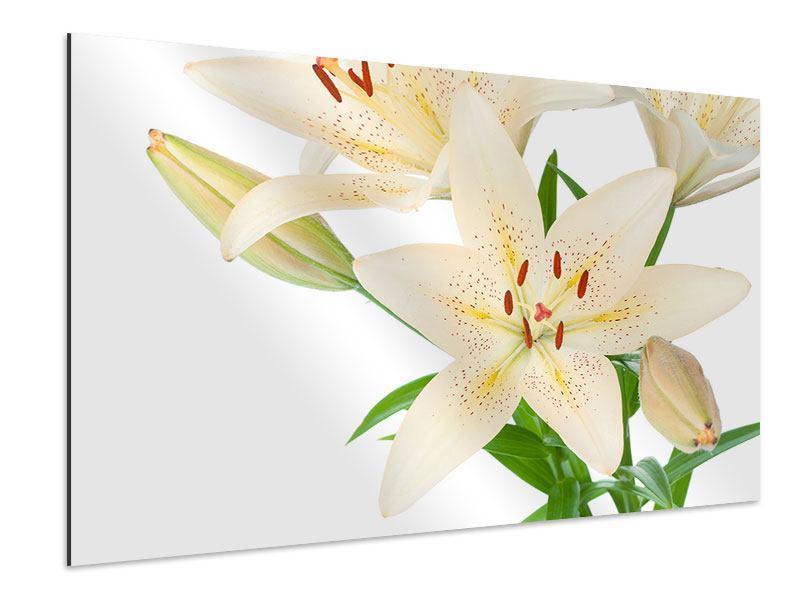 Aluminiumbild Weisser Lilienstrauch