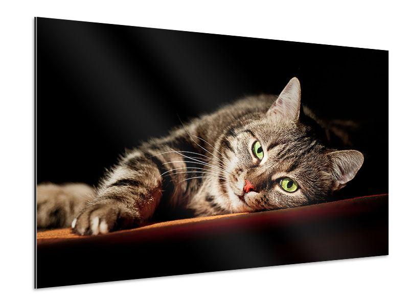 Aluminiumbild Entspannte Katze