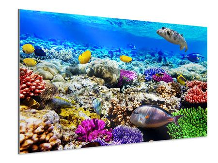 Aluminiumbild Fischaquarium