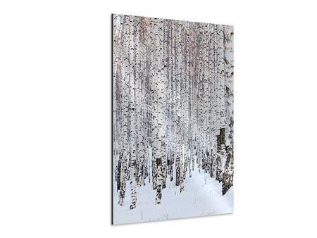 Aluminiumbild Der Birkenwald im Winter