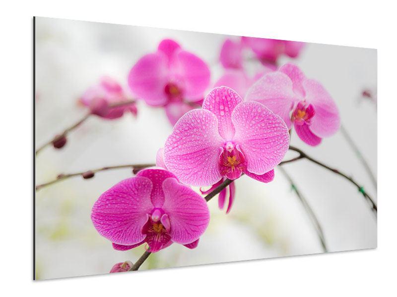 Aluminiumbild Das Symbol der Orchidee