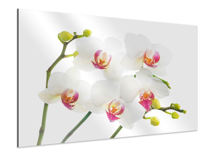 Aluminiumbild Orchideenliebe