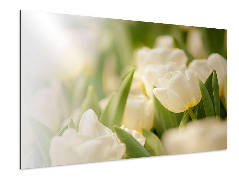 Aluminiumbild Tulpenperspektive