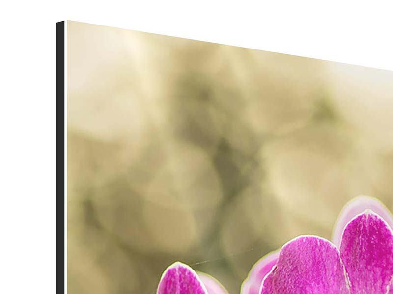 Aluminiumbild Orchideen Violett