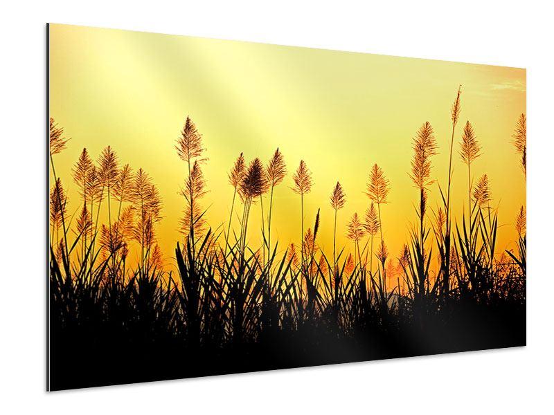 Aluminiumbild Die Blumen des Feldes