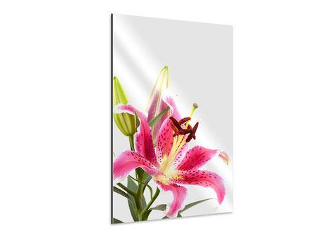 Aluminiumbild Lilie Pretty in Pink