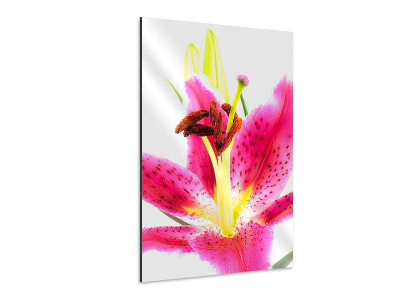 Aluminiumbild Makro-Lilie