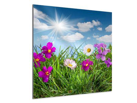 Aluminiumbild Blumenwiese