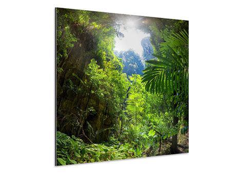 Aluminiumbild Lichtung im Dschungel