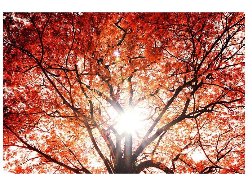 Aluminiumbild Herbstlicht