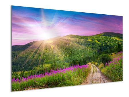 Aluminiumbild Eine Sommerlandschaft bei Sonnenaufgang