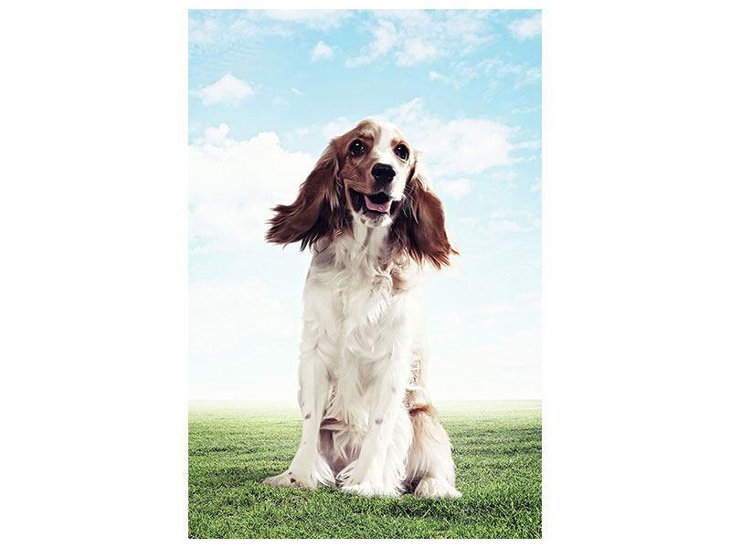 Aluminiumbild Funny Dog
