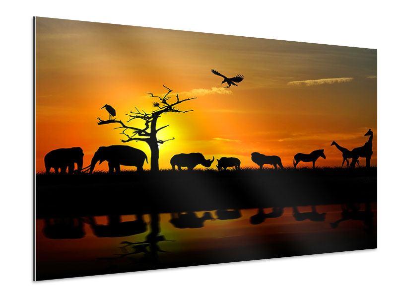 Aluminiumbild Safarietiere bei Sonnenuntergang