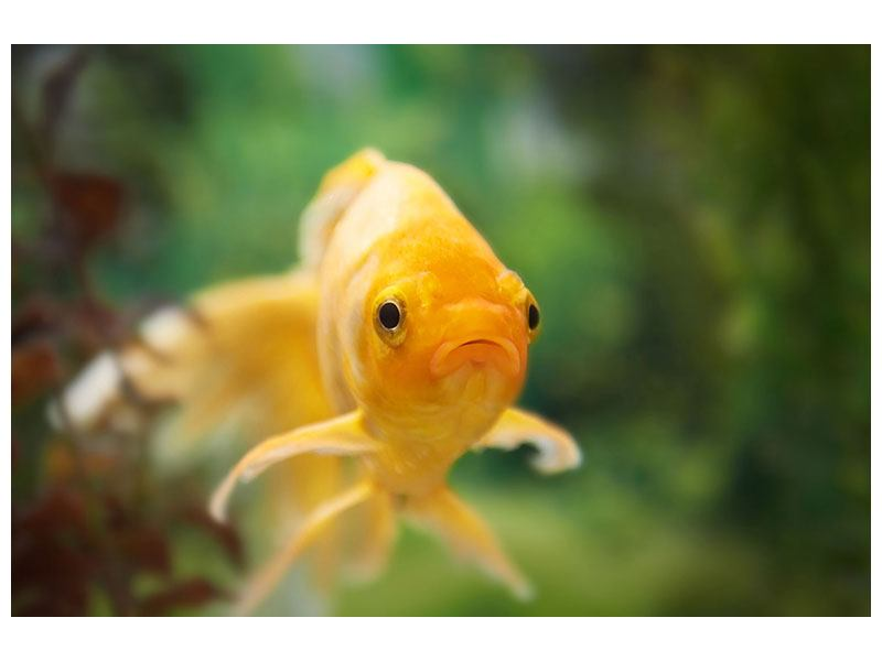 Aluminiumbild Der Fisch