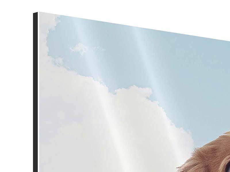 Aluminiumbild Fröhlicher Hund