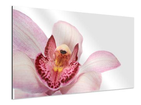 Aluminiumbild Orchideenblüte XXL