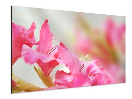 Aluminiumbild Gladiolen