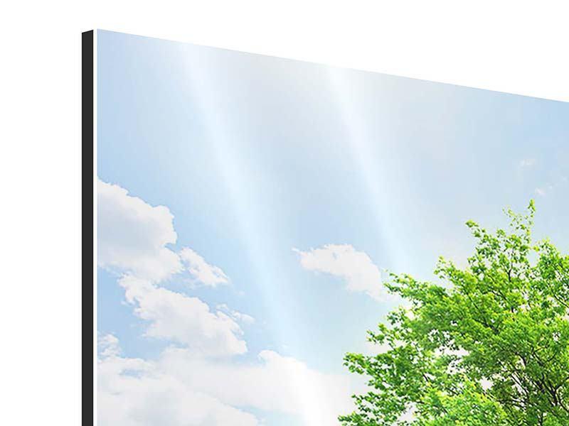 Aluminiumbild Der Baum