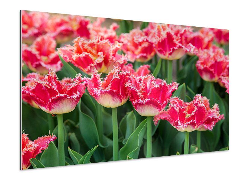 Aluminiumbild Die Tulpenwiese