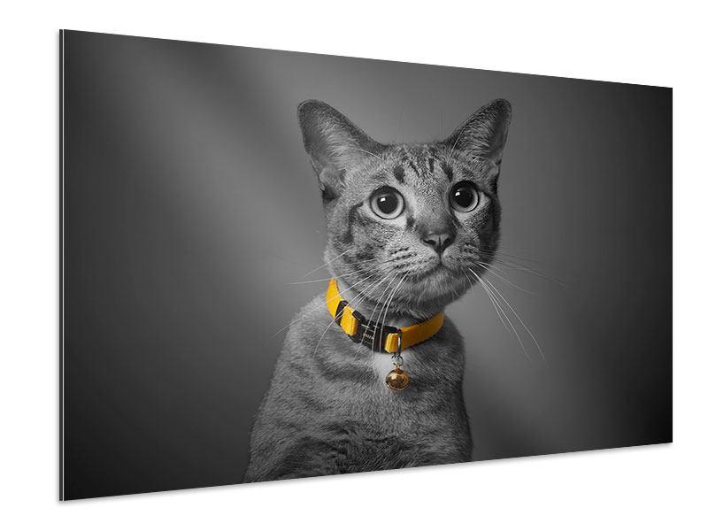 Aluminiumbild Katzenlady