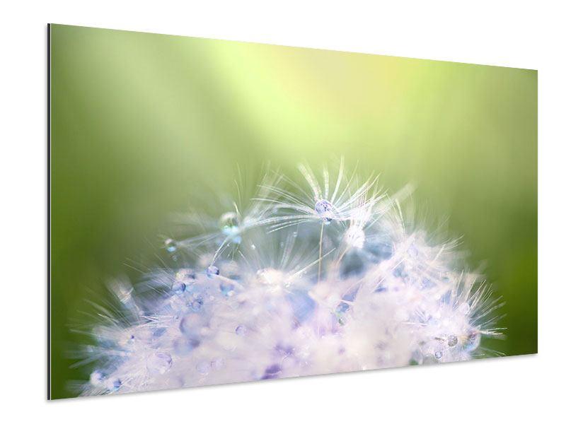 Aluminiumbild Pusteblume XL im Morgentau