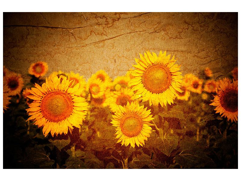 Aluminiumbild Retro-Sonnenblumen