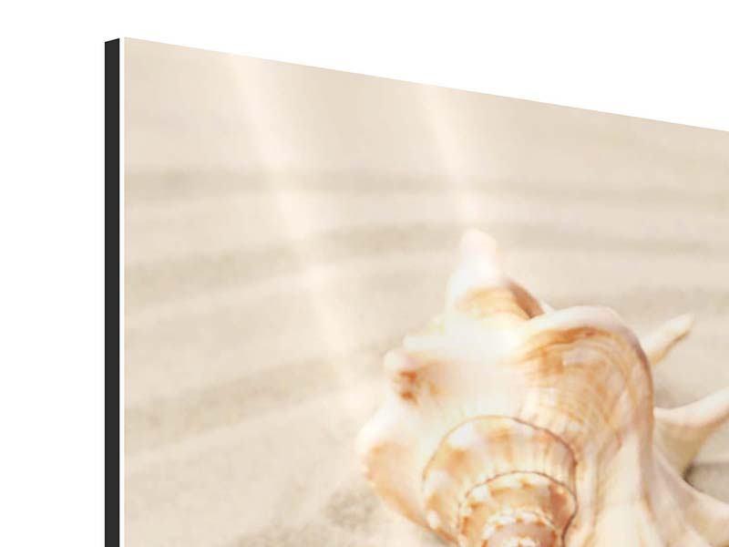 Aluminiumbild Die Muschel und der Seestern