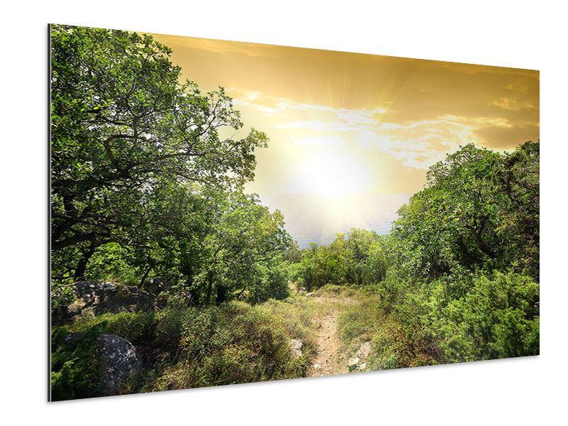 Aluminiumbild Am Ende des Waldes