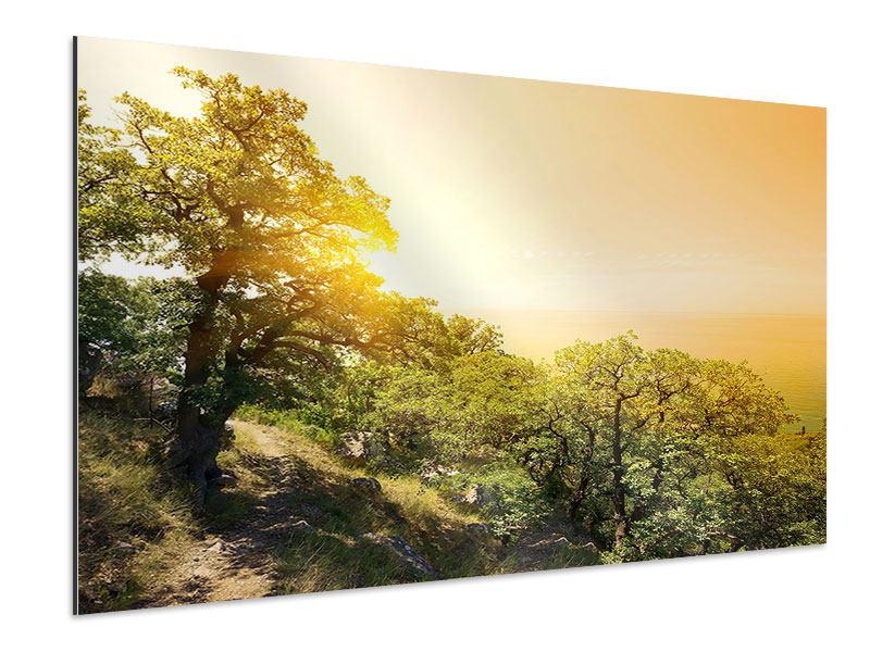 Aluminiumbild Sonnenuntergang in der Natur