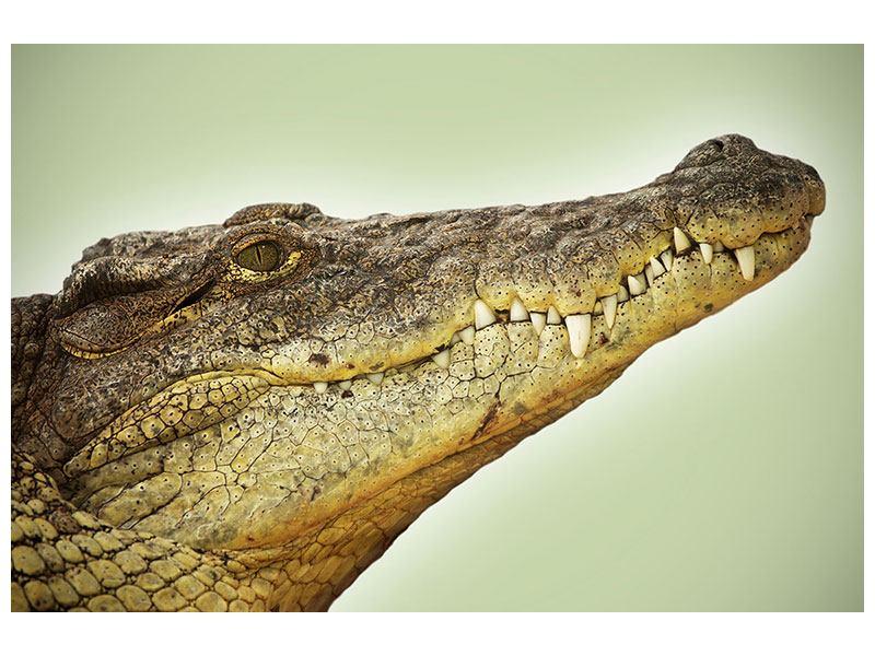 Aluminiumbild Close Up Alligator