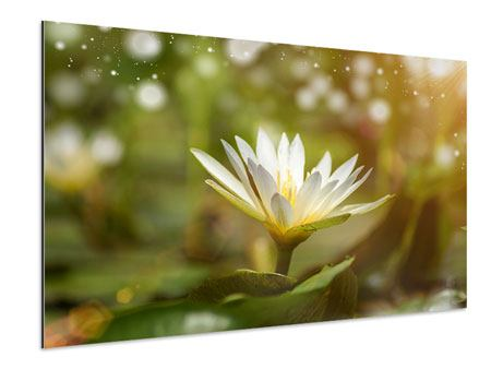 Aluminiumbild Lilien-Lichtspiel